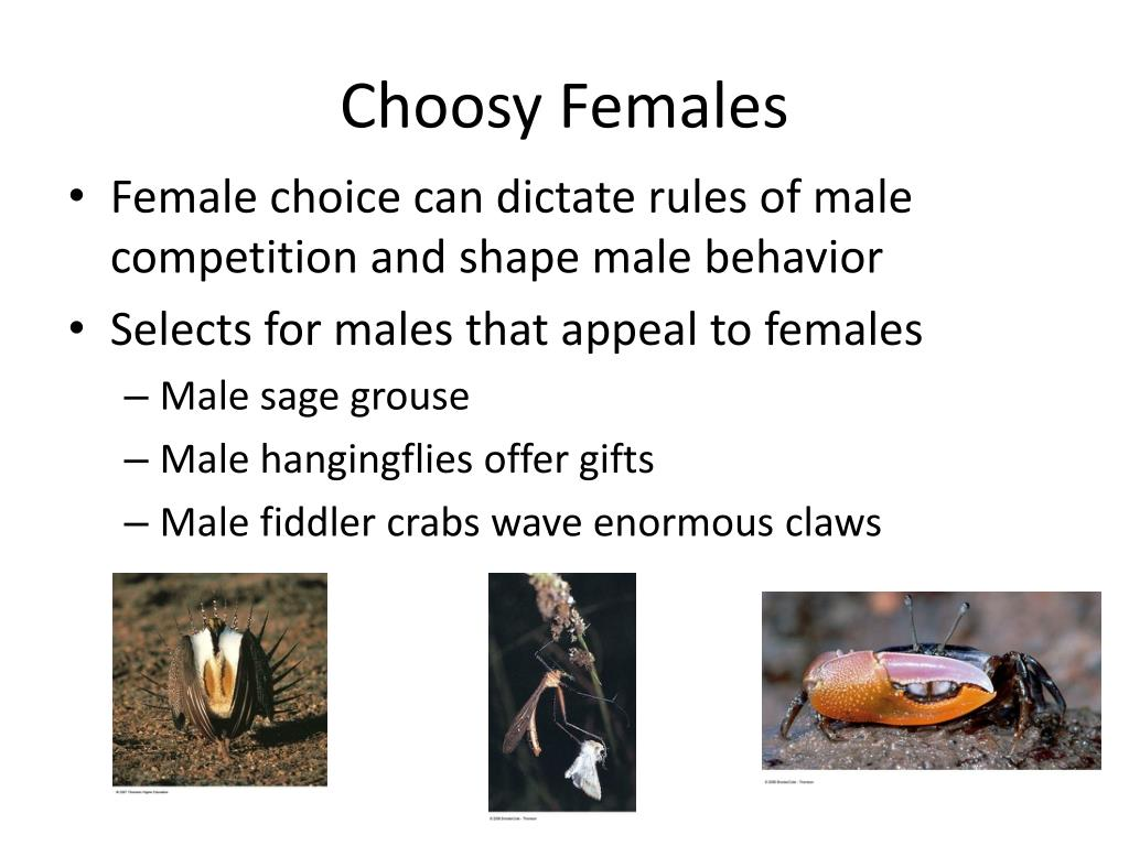 Choosy Females