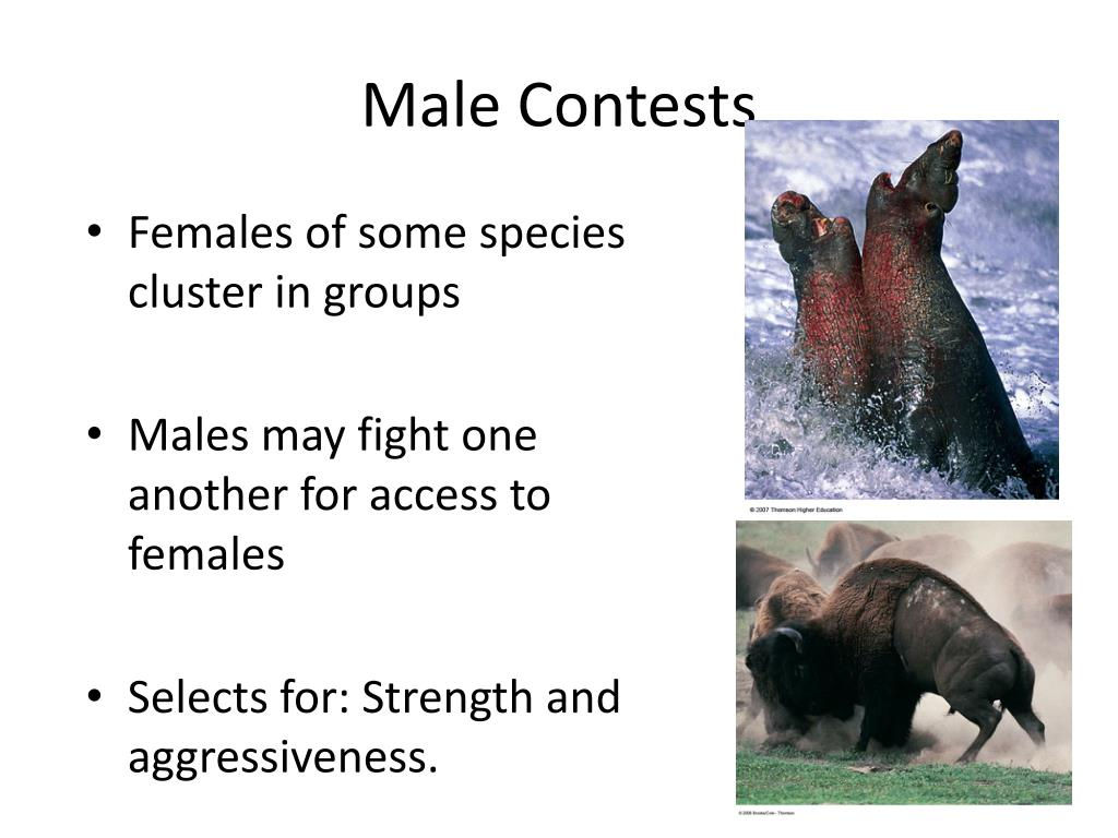 Male Contests