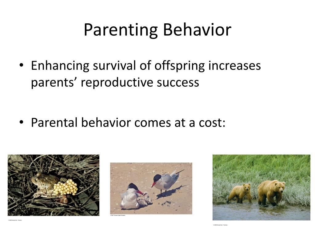 Parenting Behavior