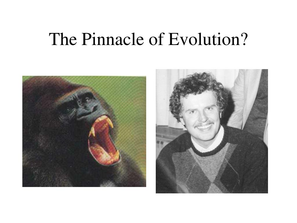The Pinnacle of Evolution?