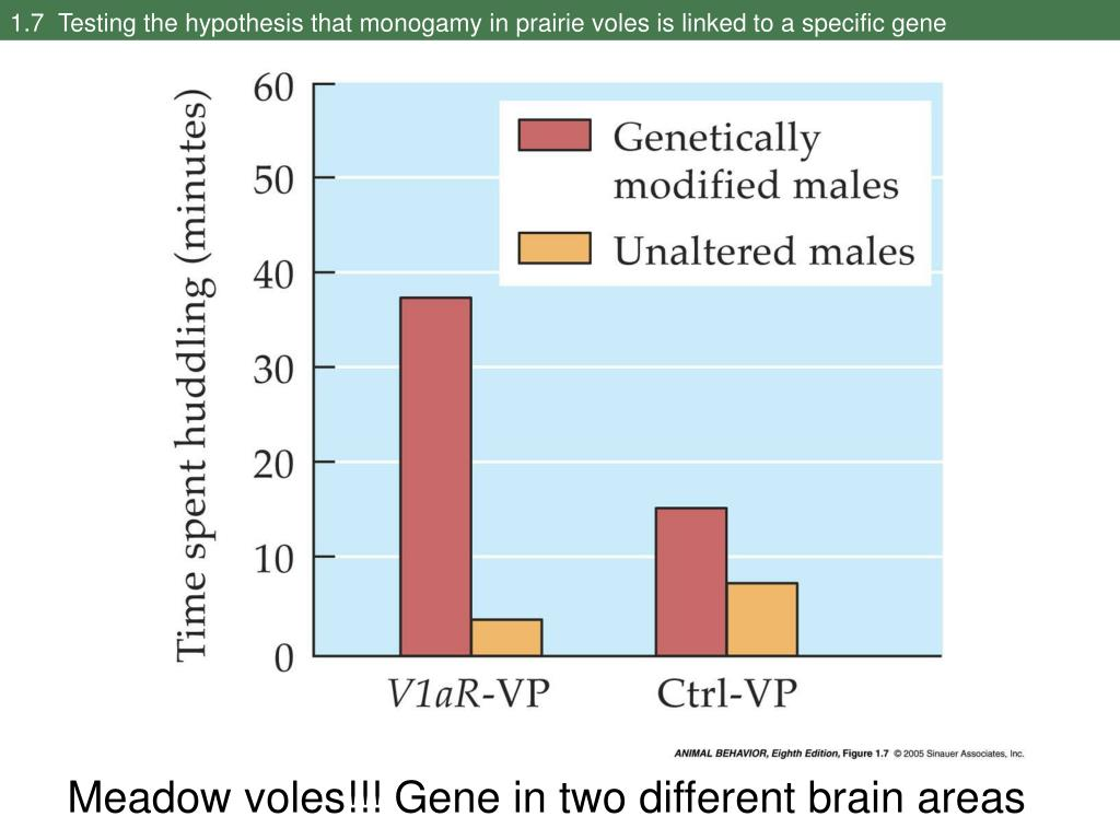 1.7  Testing the hypothesis that monogamy in prairie voles is linked to a specific gene