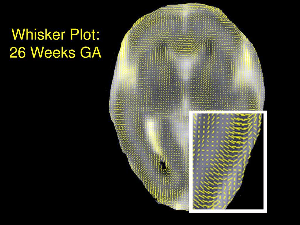 Whisker Plot:  26 Weeks GA