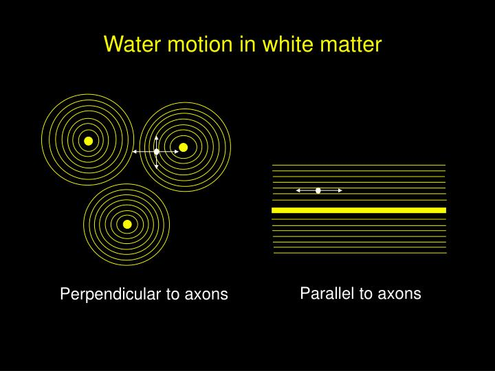 Water motion in white matter