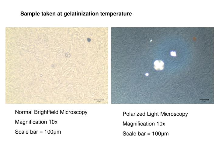 Sample taken at gelatinization temperature