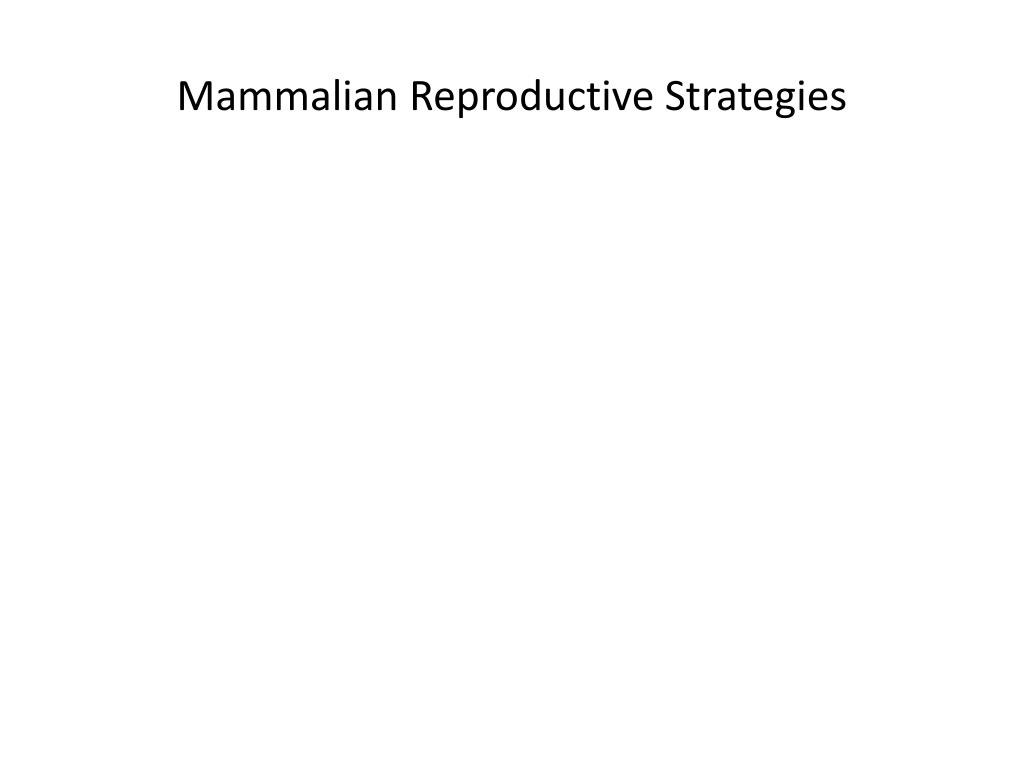 Mammalian Reproductive Strategies