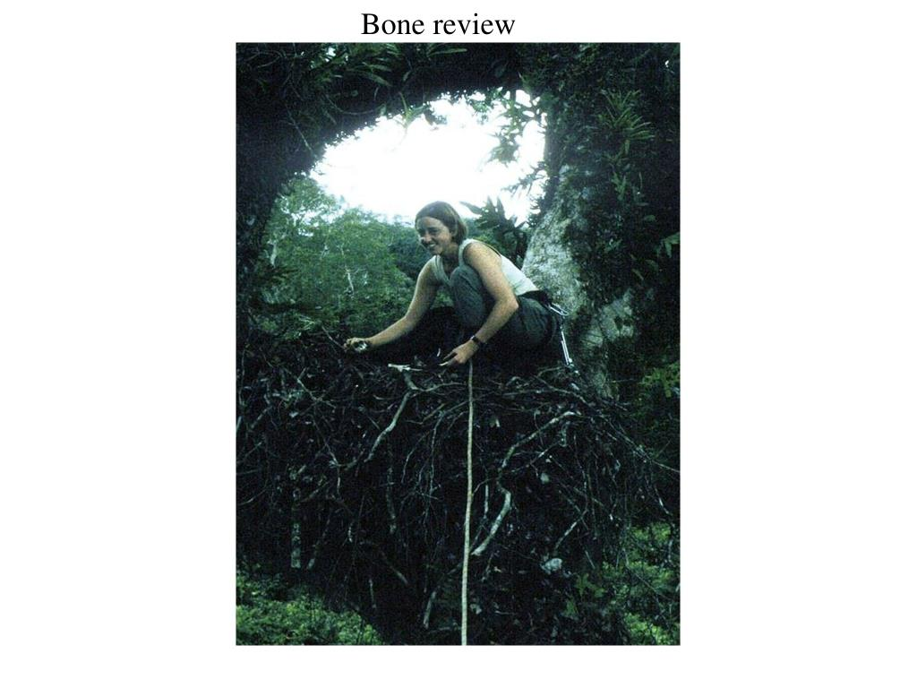 Bone review