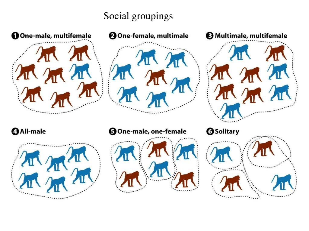 Social groupings