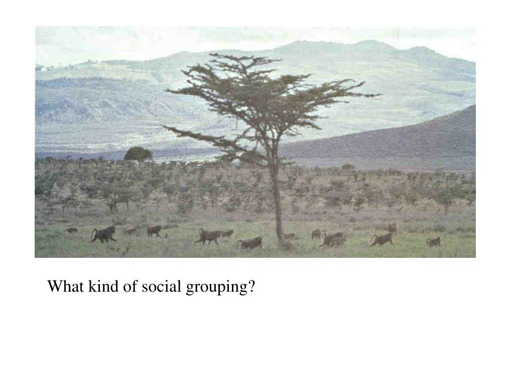 What kind of social grouping?