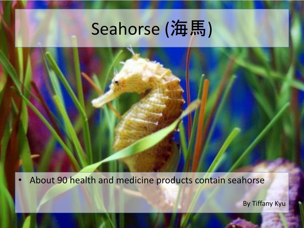 Seahorse (