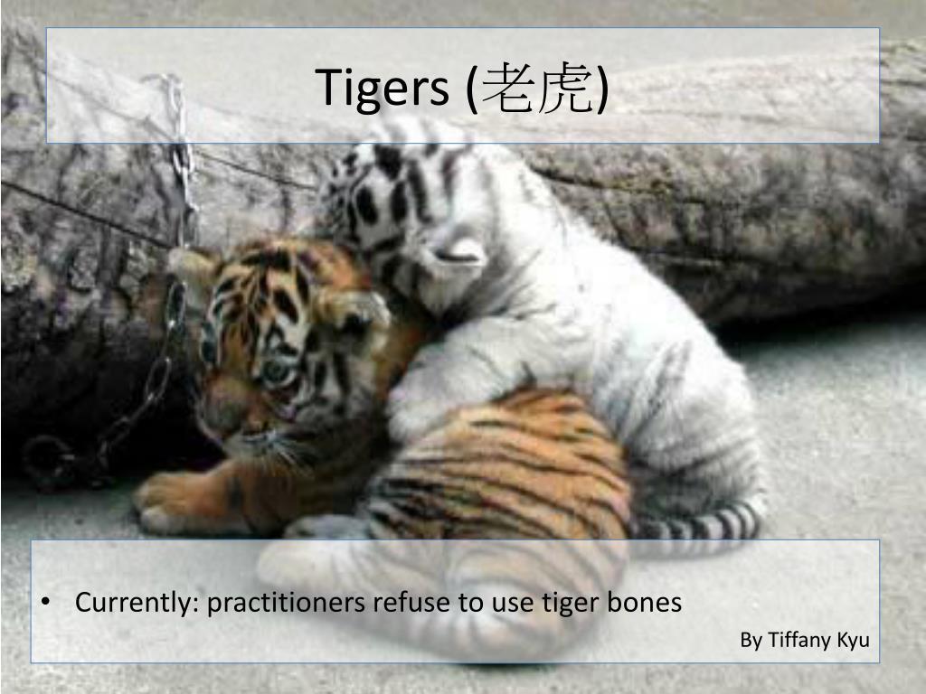Tigers (