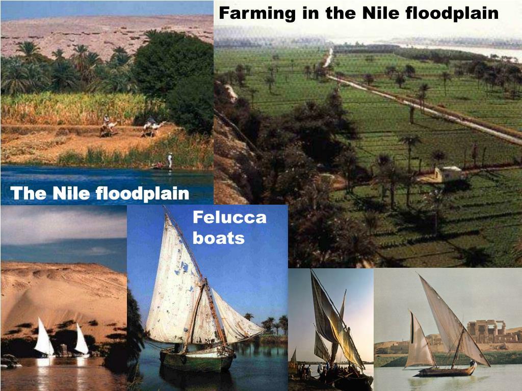 Farming in the Nile floodplain