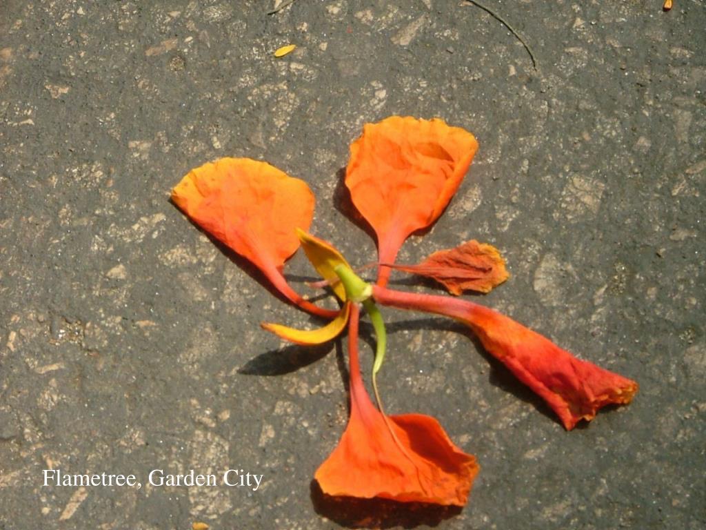 Flametree, Garden City