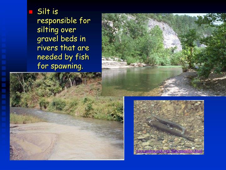 Silt is responsible for silting over gravel beds in rivers that are needed by fish for spawning.