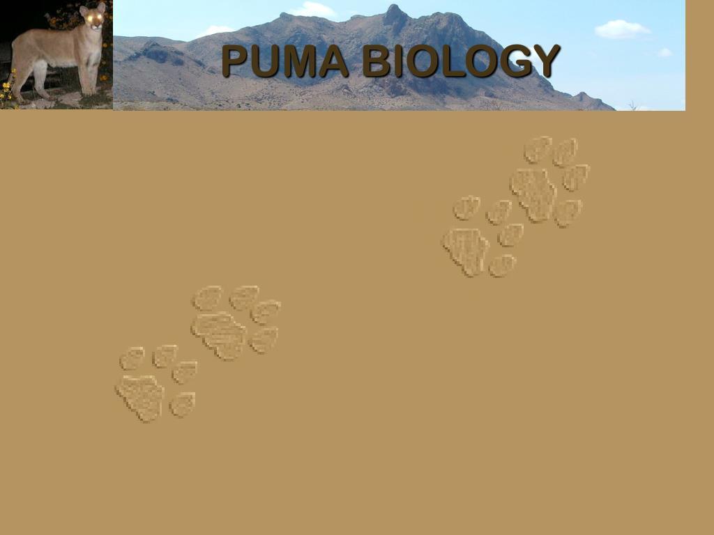 PUMA BIOLOGY