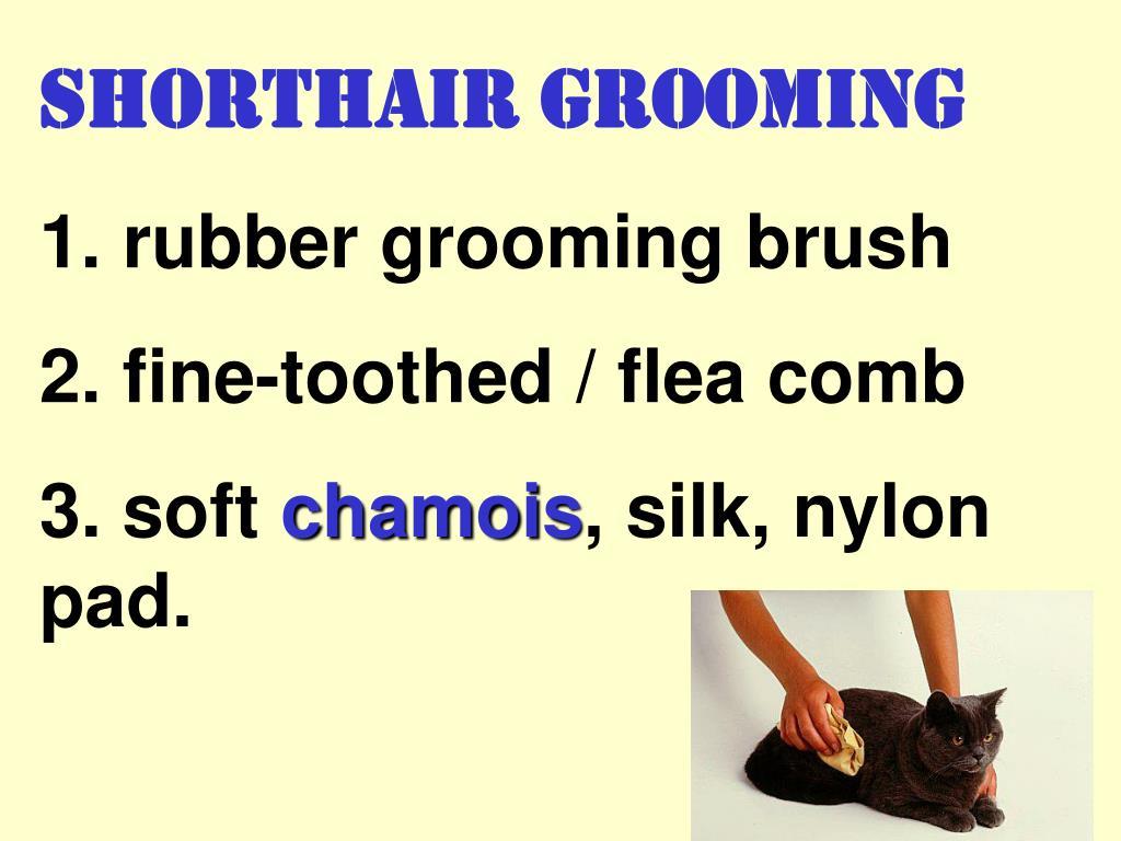 Shorthair Grooming