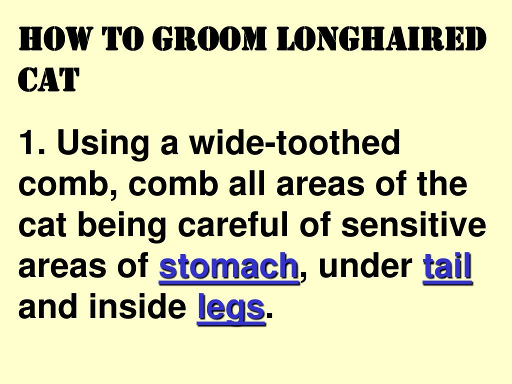 How to groom longhaired cat