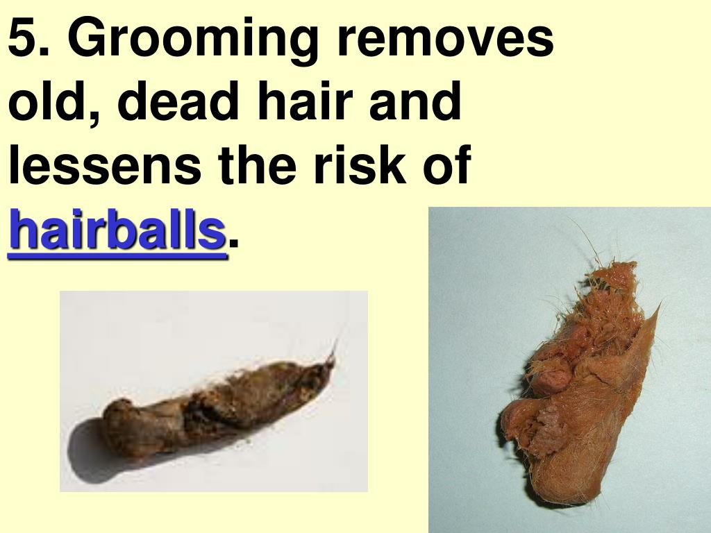 5. Grooming removes old, dead hair and lessens the risk of