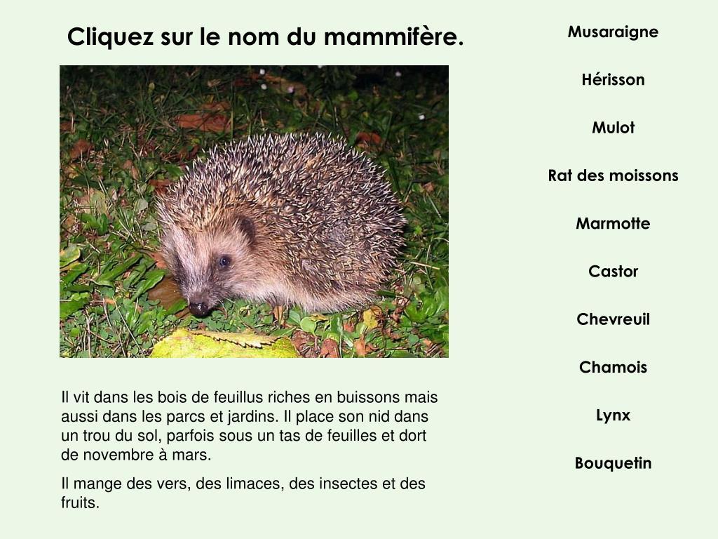 Cliquez sur le nom du mammifère.