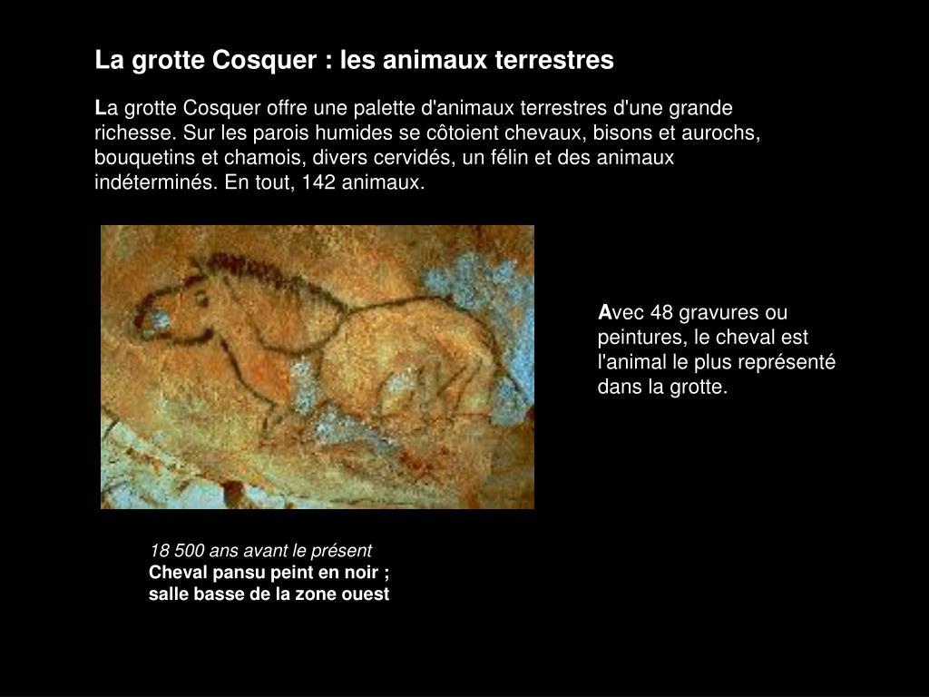 La grotte Cosquer : les animaux terrestres