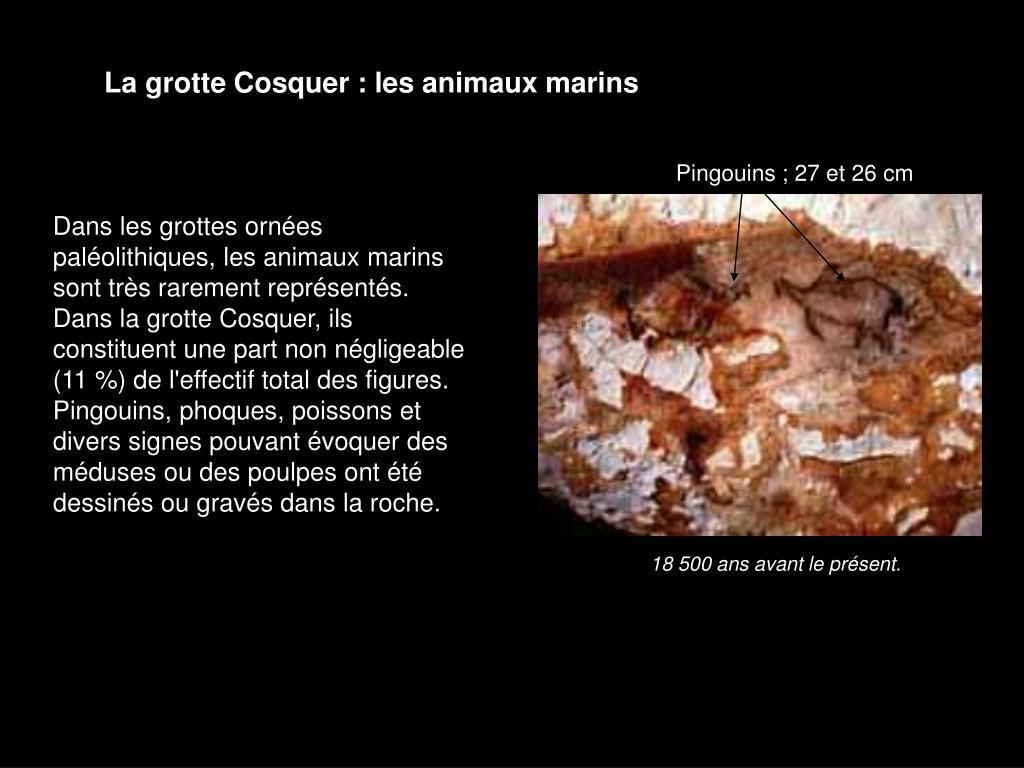 La grotte Cosquer : les animaux marins