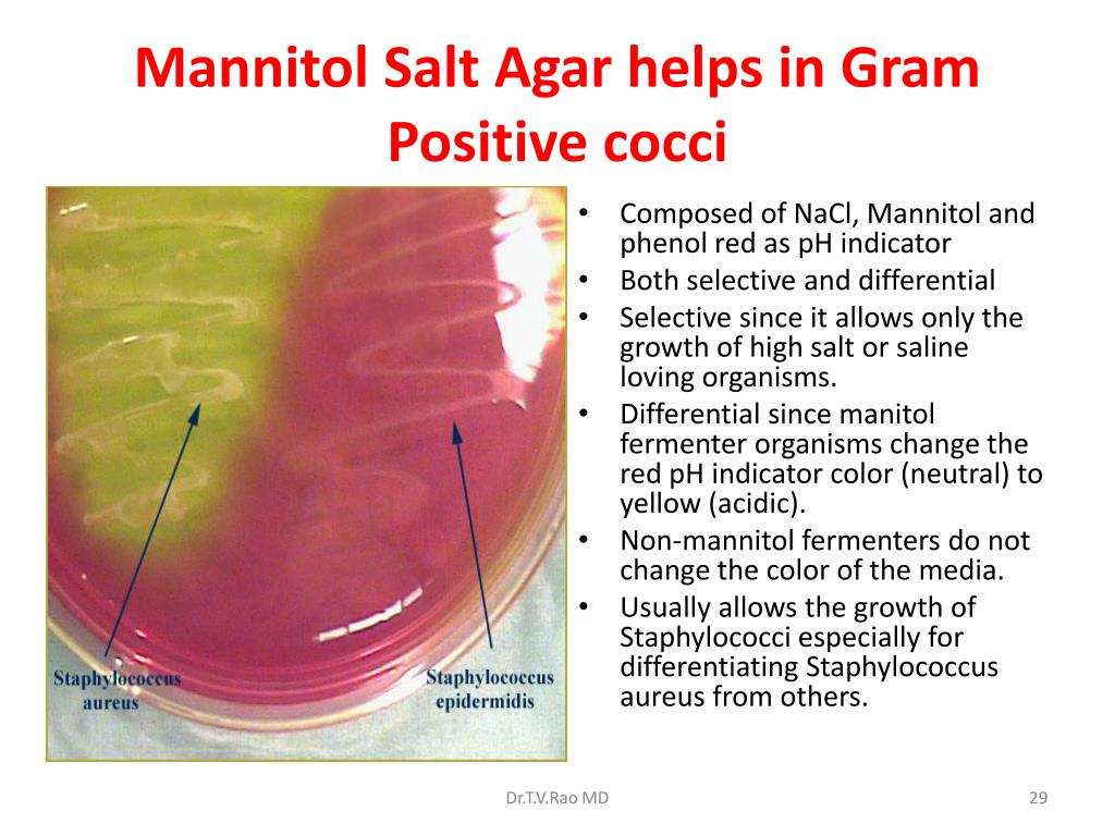 Mannitol Salt Agar helps in Gram Positive cocci