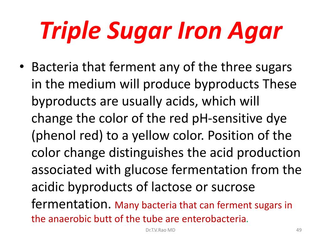 Triple Sugar Iron Agar