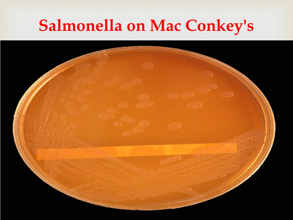 Salmonella on Mac Conkey's agar