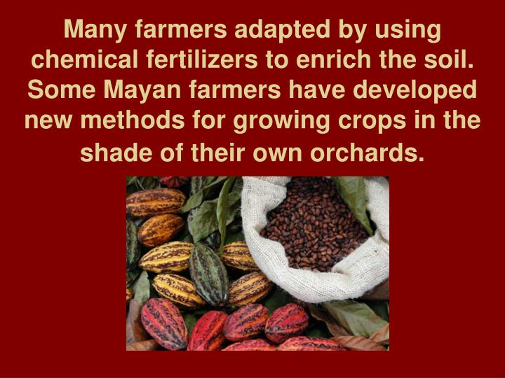 Many farmers adapted by using chemical fertilizers to enrich the soil. Some Mayan farmers have developed new methods for growing crops in the shade of their own orchards.