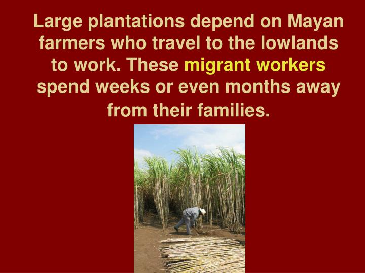 Large plantations depend on Mayan farmers who travel to the lowlands to work. These
