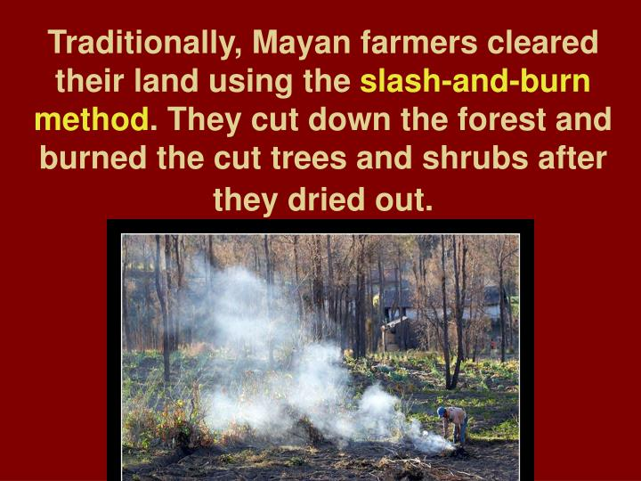 Traditionally, Mayan farmers cleared their land using the