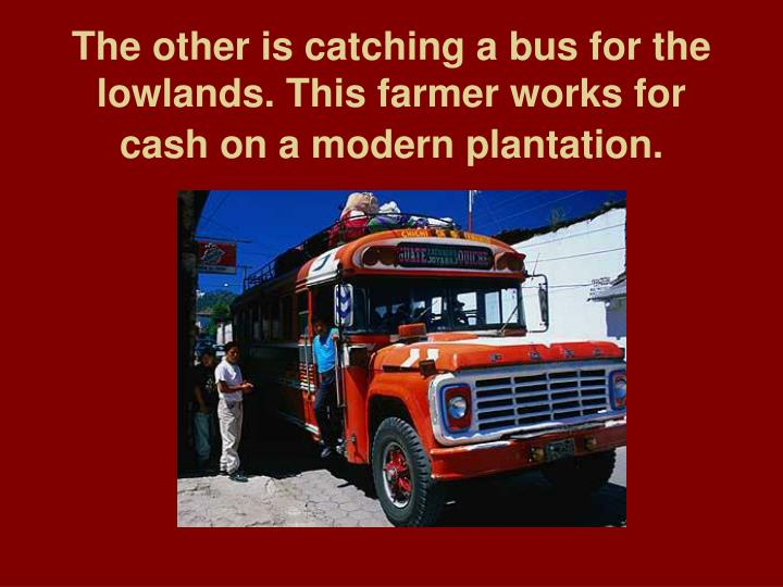 The other is catching a bus for the lowlands. This farmer works for cash on a modern plantation.