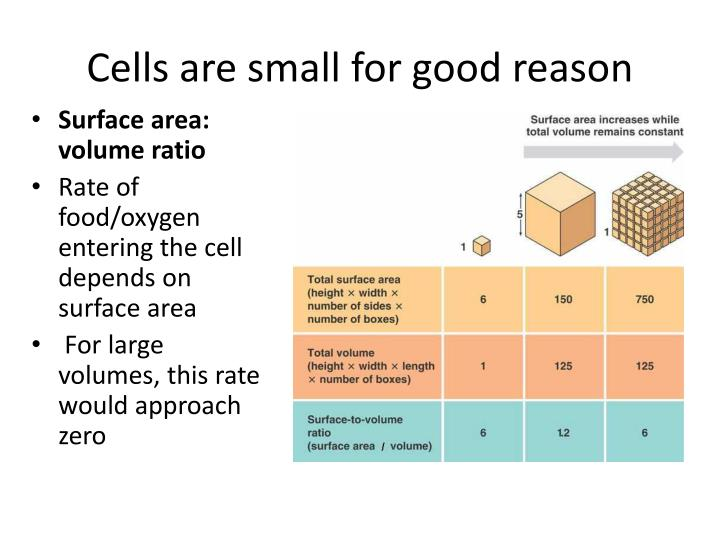 Cells are small for good reason