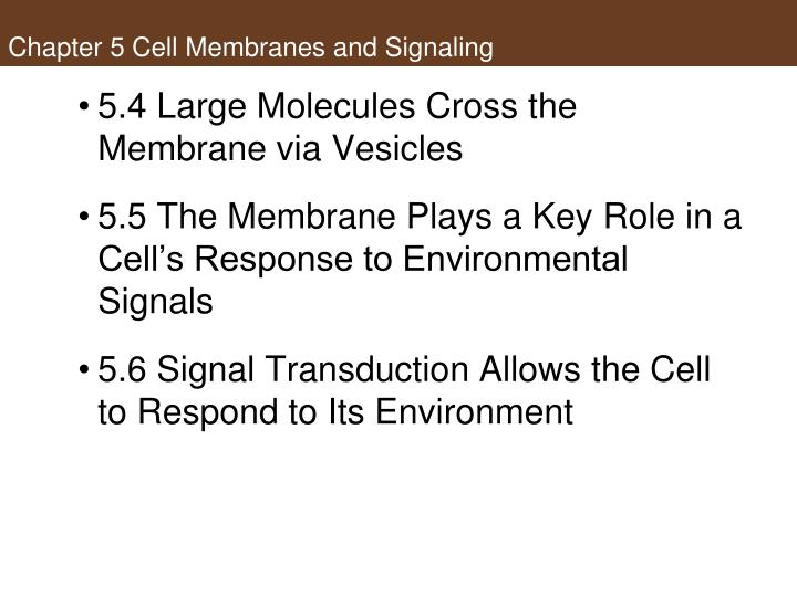 Chapter 5 cell membranes and signaling1