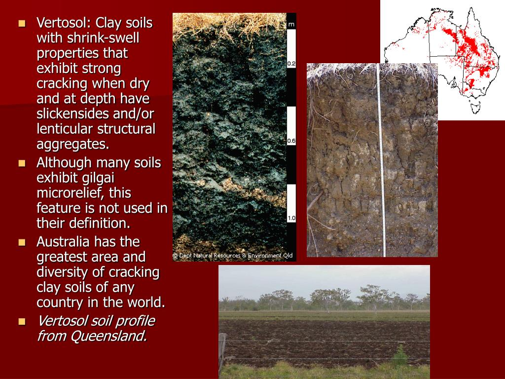 Vertosol: Clay soils with shrink-swell properties that exhibit strong cracking when dry and at depth have slickensides and/or lenticular structural aggregates.