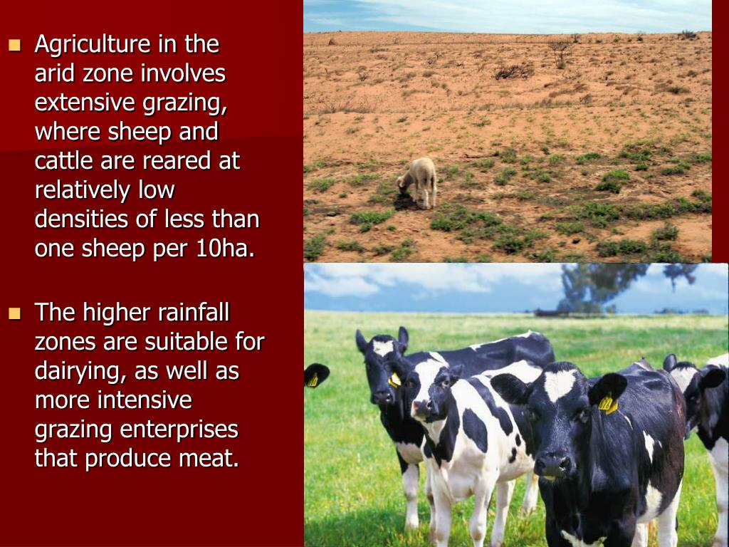 Agriculture in the arid zone involves extensive grazing, where sheep and cattle are reared at relatively low densities of less than one sheep per 10ha.