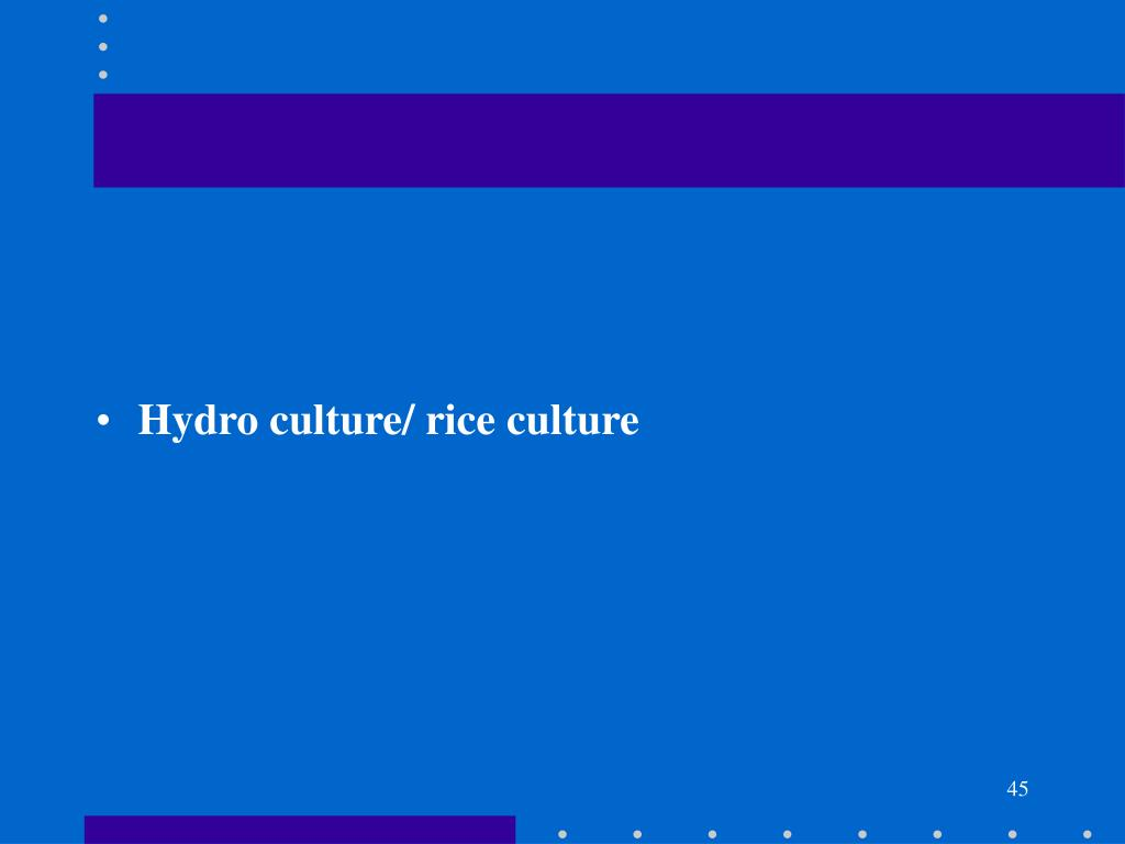 Hydro culture/ rice culture