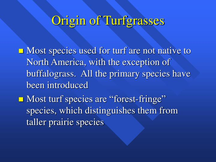 Origin of turfgrasses