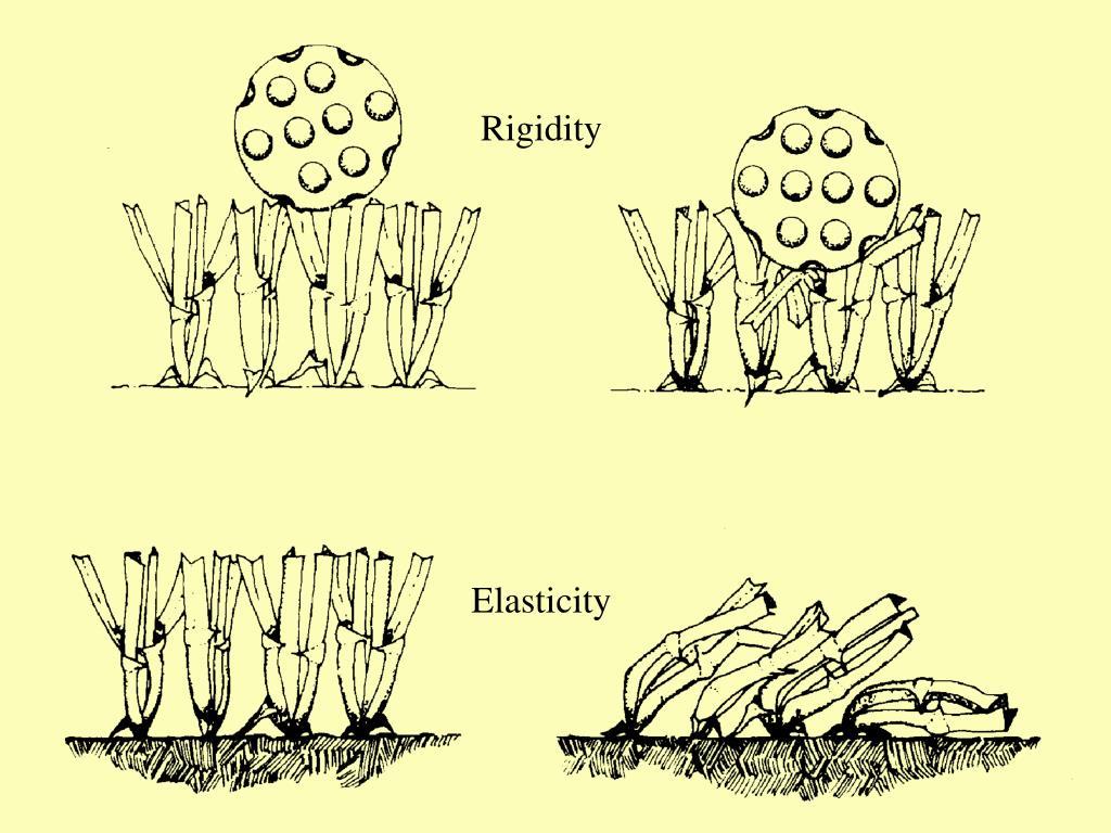 Rigidity