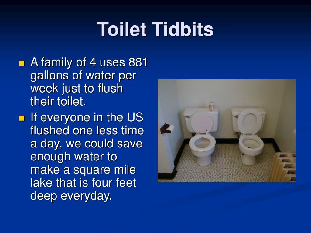 Toilet Tidbits