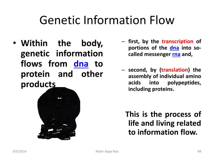 Genetic Information Flow