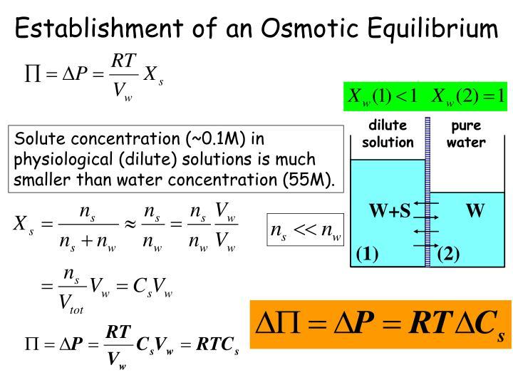 Establishment of an Osmotic Equilibrium