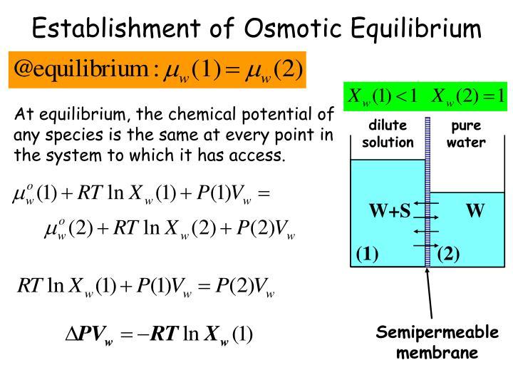 Establishment of Osmotic Equilibrium