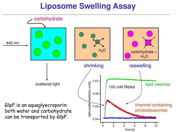 Liposome Swelling Assay