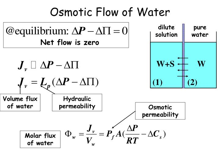 Osmotic Flow of Water