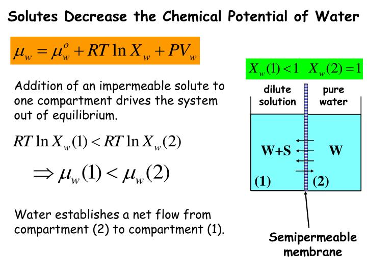 Solutes Decrease the Chemical Potential of Water