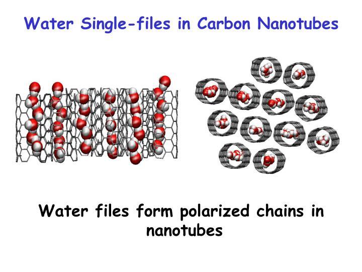 Water Single-files in Carbon Nanotubes