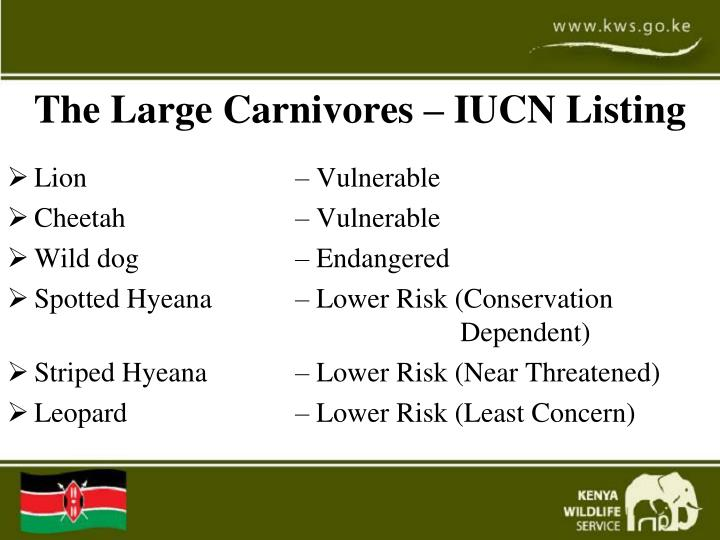 The Large Carnivores – IUCN Listing
