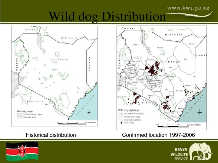 Wild dog Distribution