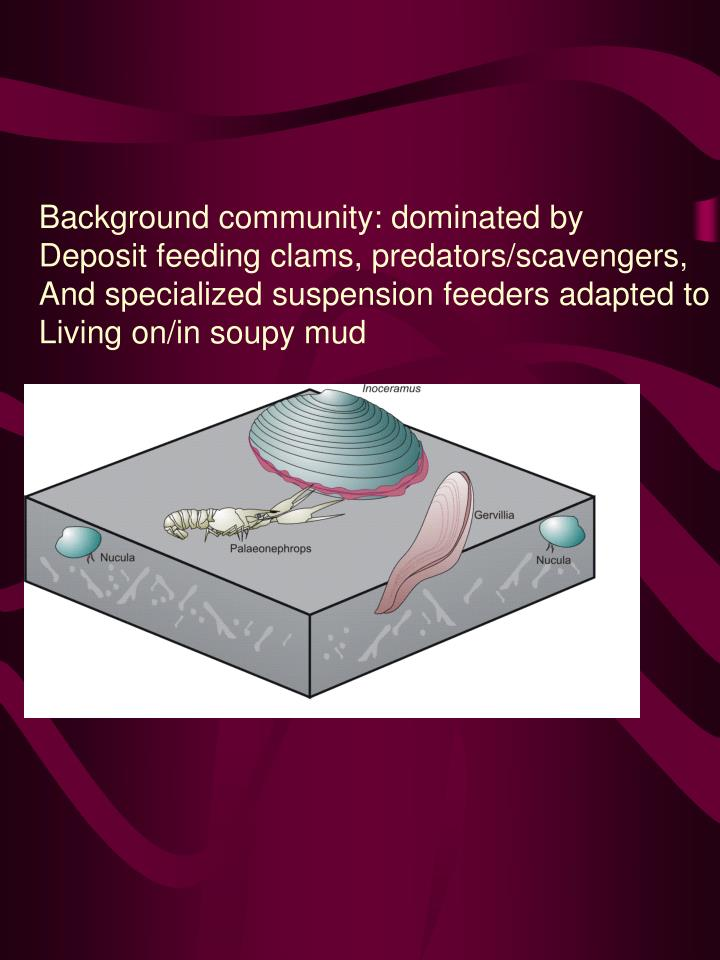 Background community: dominated by