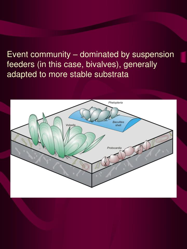 Event community – dominated by suspension feeders (in this case, bivalves), generally adapted to more stable substrata